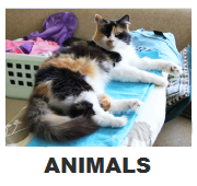 9_ANIMALS
