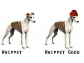 23 - Whippet Good