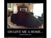 41 - Buffalo Home