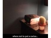 43 - Cactus