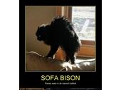 71 - Sofa Bison