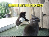 77 - Cat Rumble