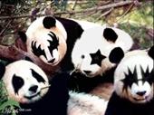 98 - Kiss Pandas