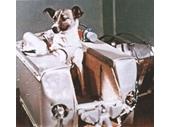 02 - Sputnik 2's passenger Laika