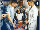 10 - Chimpanzee Ham before going on Mercury 2
