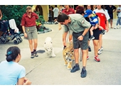 1990's Dreamworld -  Walking the Tiger Cubs