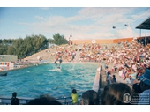 1970's Dolphin show at Marineland