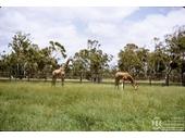1970's Natureland 2
