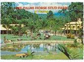 1980's The Palms Stud Farm postcard 1