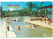 1980's The Palms Stud Farm postcard 2