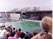 1960's Jack Evan's Porpoise Pool 1