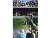 1960's Jack Evan's Porpoise Pool 2