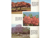 119 - 1960's Brisbane Pictorial Book 9