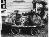 76 - Show exhibit for Campsie Fruit Farms, Ormiston in 1914
