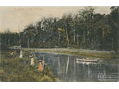 64 - Early 1900's photo of Enoggera Creek