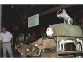 157 - The Aussie Woolshed attraction that used to be on Samford Road at Ferny Hills