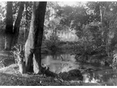 86 - An early photo of Kedron Brook, probably around Kalinga looking quite idyllic