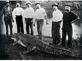 135 - A 4.2 metre crocodile was shot in the Logan River in the 1890's