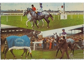 87 - Gunsynd was a champion grey Queensland thoroughbred who won 29 races in the 1970's
