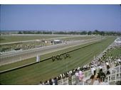 88 - Horse Racing at Eagle Farm racecourse