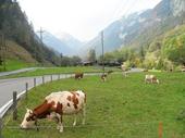 136 -  Grindelwald