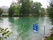 141 - Where they swim in Berne's fast flowing river