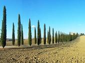 121 - Tuscany
