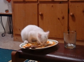 58 - Honey precariously licking the plate clean
