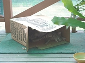 62 - Bunny in a box