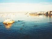 61 - Seals and birds off Monterey