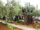 76 - Garden of Gethsemane