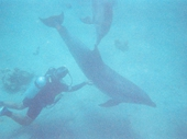 130 - Eilat - Swimming with the Dolphins
