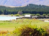 51 - Lake Tekapo