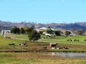13 - Dairy Farm south of Beaudesert