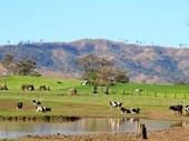 25 - Dairy Farmland south of Beaudesert