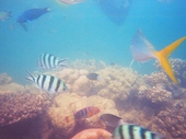 02 - Colourful fish off Hayman Island