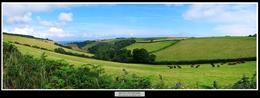 17 Devon Countryside