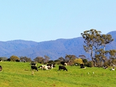 04 - Dairy Farm in Southern Highlands
