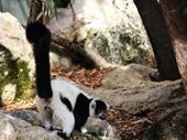 15 - Lemur