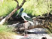 26 - Heron