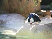 27 - Penguin