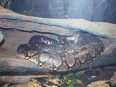 28 - Snake