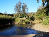 28 - Creek near Canungra