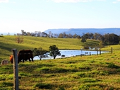 29 - Dairy Farm between Canungra and Beechmont