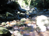 51 - Springbrook National Park 2