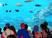 79 - Sea World Aquarium