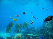 80 - Sea World Aquarium