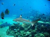 82 - Sea World Aquarium