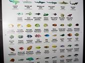 83 - Sea World Aquarium