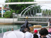 86 - Sea World Seal Show
